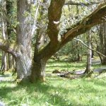 Old Oakwood Walks & Trails at Bike Park Ireland